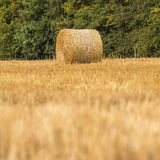 Roll of hay during harvest time Stock Image
