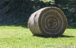 Roll of hay lie in a sloping field. Stock Photography