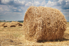 Roll of hay. Rolls of hay on a field Royalty Free Stock Images