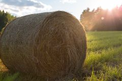 Roll of hay on a sunny background Royalty Free Stock Photo