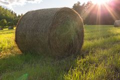 Roll of hay on a sunny background Royalty Free Stock Photos