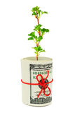Roll of money and plant Stock Images