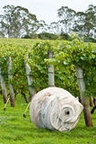 Roll of netting to protect crop at vineyard Stock Images
