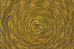 Roll Rope yellow and black. Stock Photography