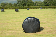 A roll of silage in a black plastic bag. Stock Photography
