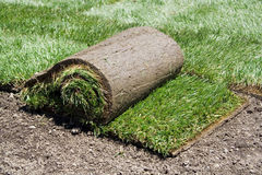 Roll of sod and green grass. Roll of sod on the backyard stock image