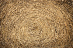 Roll of straw Stock Photography