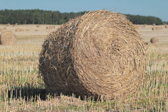 Roll of straw Royalty Free Stock Photo