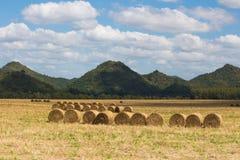 Roll straw farmland Stock Images