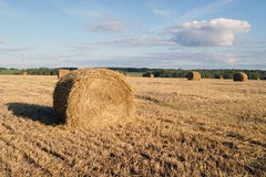 Roll of straw in the field Stock Images