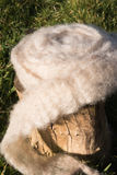 Roll of washed and carded sheep wool Royalty Free Stock Photos