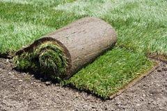 Rolle der Grasscholle und des grünen Grases Stockbild