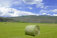 Rolled bale of wheat on farm, American west Royalty Free Stock Image