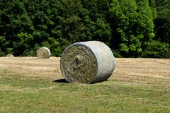 Rolled bales Stock Image