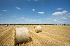 Rolled bales on field Stock Image