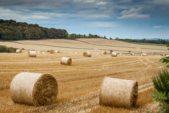 Rolled bales of hay. Bales of rolled golden hay in a hilly Scottish field Royalty Free Stock Photography