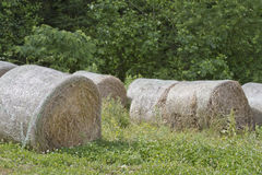 Rolled Bales of Hay Stock Photography
