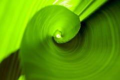 Rolled banana leaf, green background Stock Image