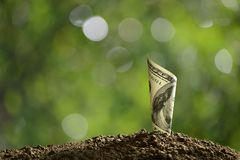 Rolled bank note on top of soil for business, saving, growth, economic concept Royalty Free Stock Photos