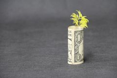 Rolled banknote money one US dollar and young plant grow up with dark grey floor and background stock photography