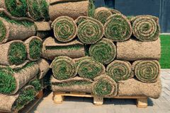 The rolled grass lawn is ready for laying stock image