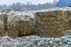 Rolled harvested hay. And snow Royalty Free Stock Photo