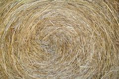 Rolled Hay Stock Images
