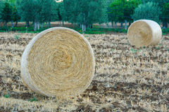 Rolled Hay Bails. In farm land . picture taken in Bernalda Italy 2007 royalty free stock images