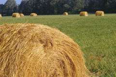 Rolled hay bale Stock Image