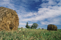 Rolled hay bale Stock Photography
