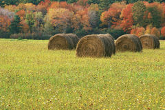 Rolled hay bale Stock Photo