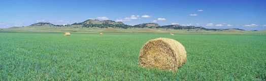 Rolled hay bale Stock Photos