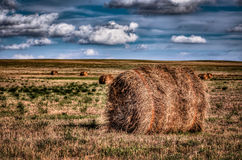 Rolled Hay Bale on a Farm Royalty Free Stock Images