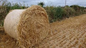 Rolled hay bale Royalty Free Stock Photo