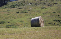Rolled hay bale. On the freshly ground field in the hill in summer Royalty Free Stock Photos