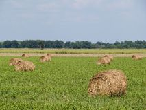 Rolled hay bales Stock Image
