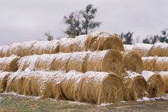 Rolled hay bales Stock Images