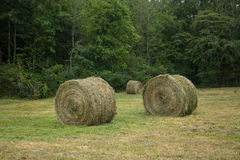 Rolled Hay Bales stock photos