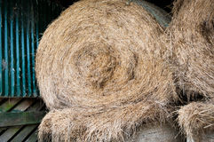 Rolled Hay bales Stock Photo