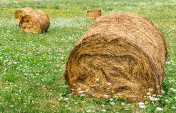 Rolled hay bales Royalty Free Stock Photos
