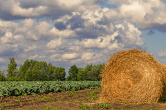 Rolled hay Stock Photography