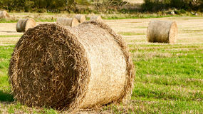 Rolled hay. Closer look royalty free stock image