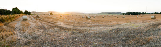 Rolled hay - Panorama Picture Royalty Free Stock Photos