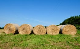 Rolled Hay Royalty Free Stock Photos