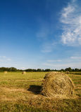 Rolled hayricks. Field with rolled hayricks on it Royalty Free Stock Photo