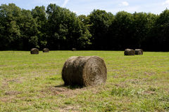 Rolled haystacks on a field after harvest Royalty Free Stock Photos
