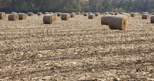 Rolled HayStacks In A Field Stock Image
