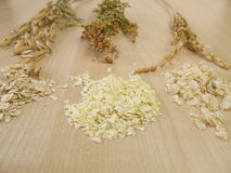 Rolled oats, rolled rice and rolled millet Royalty Free Stock Images