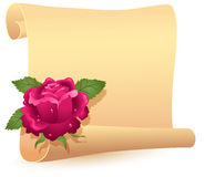 Rolled parchment and rose Royalty Free Stock Photos