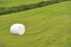 Rolled silage bale in the meadow. At Iceland Royalty Free Stock Photography